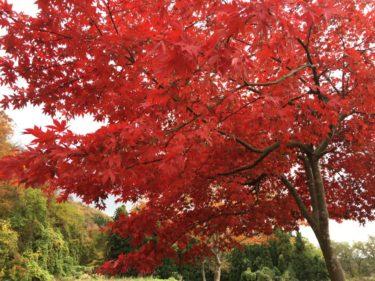 新潟から紅葉を見に日帰りで行ける阿賀町の絶景スポット!帰りは温泉でのんびり