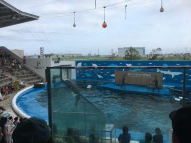 仙台うみの杜水族館イルカショーは混雑必須!時間は要チェック!